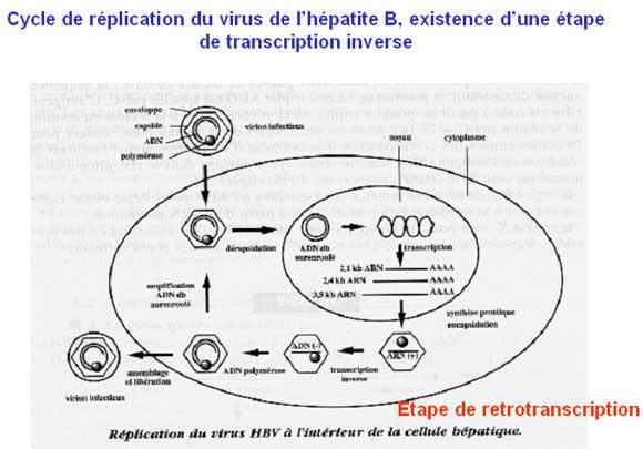 Mieux vaut ne pas avoir l'hépatite C en Gaspésie